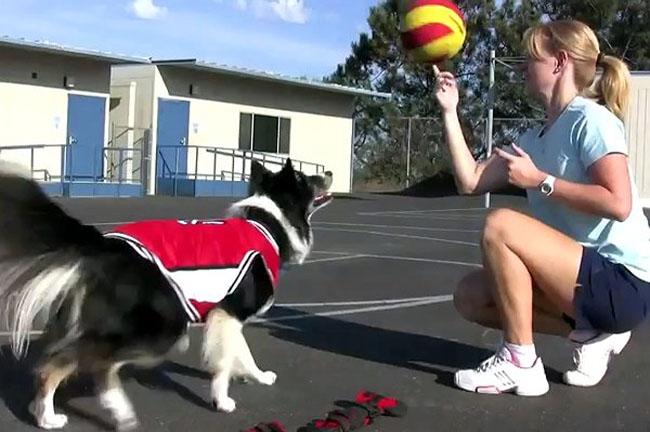 dog-basketball